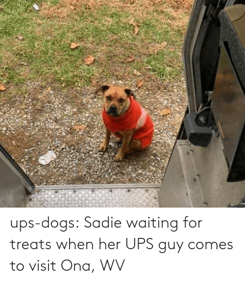 Dogs: ups-dogs:  Sadie waiting for treats when her UPS guy comes to visit Ona, WV