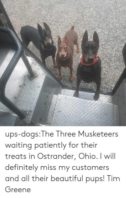 Waiting Patiently: ups-dogs:The Three Musketeers waiting patiently for their treats in Ostrander, Ohio. I will definitely miss my customers and all their beautiful pups! Tim Greene