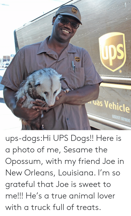 animal lover: ups  uas Vehicle  USDOT 021800 ups-dogs:Hi UPS Dogs!! Here is a photo of me, Sesame the Opossum, with my friend Joe in New Orleans, Louisiana. I'm so grateful that Joe is sweet to me!!! He's a true animal lover with a truck full of treats.