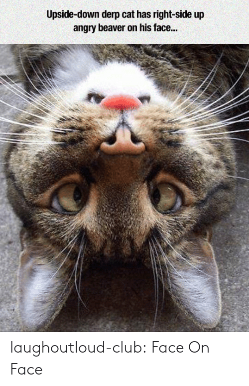 beaver: Upside-down derp cat has right-side up  angry beaver on his face... laughoutloud-club:  Face On Face