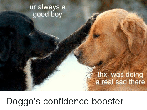 Confidence, Good, and Sad: ur always a  good boy  thx, was doing  a real sad there <p>Doggo's confidence booster</p>