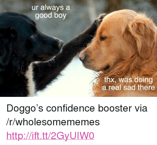 """Confidence, Good, and Http: ur always a  good boy  thx, was doing  a real sad there <p>Doggo's confidence booster via /r/wholesomememes <a href=""""http://ift.tt/2GyUIW0"""">http://ift.tt/2GyUIW0</a></p>"""