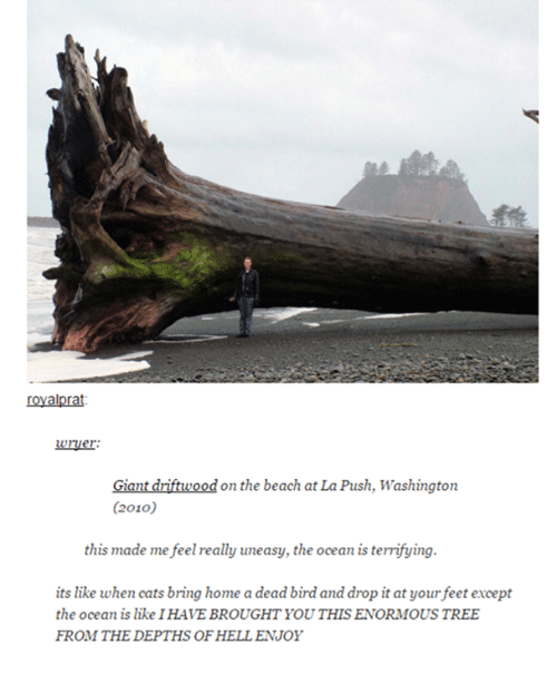 driftwood: Uruer:  Giant driftwood on the beach at La Push, Washington  (2010)  this made me feel really uneasy, the ocean is terrifying.  its like when cats bring home a dead bird and drop it at your feet except  the ocean is like IHAVE BROUGHT YOU THIS ENORMOUS TREE  FROM THEDEPTHS OFHELLENJOY