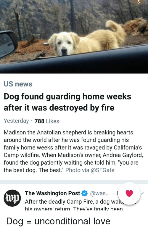 "Best Dog: US news  Dog found guarding home weeks  after it was destroyed by fire  Yesterday 788 Likes  Madison the Anatolian shepherd is breaking hearts  around the world after he was found guarding his  family home weeks after it was ravaged by California's  Camp wildfire. When Madison's owner, Andrea Gaylord,  found the dog patiently waiting she told him, 'you are  the best dog. The best."" Photo via@SFGate  The Washington Post @was... [  up  After the deadly Camp Fire, a dog wan  his owners' return Thev've finally been Dog = unconditional love"