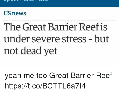 News, Yeah, and Girl Memes: US news  The Great Barrier Reef is  under severe stress-but  not dead yet yeah me too Great Barrier Reef https://t.co/BCTTL6a7I4