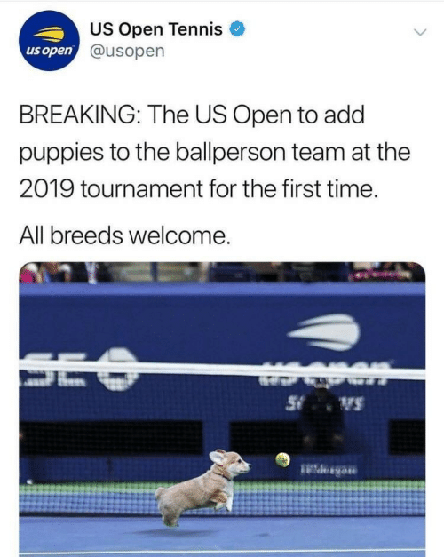 Tournament: US Open Tennis  @usopen  us open  BREAKING: The US Open to add  puppies to the ballperson team at the  2019 tournament for the first time.  All breeds welcome