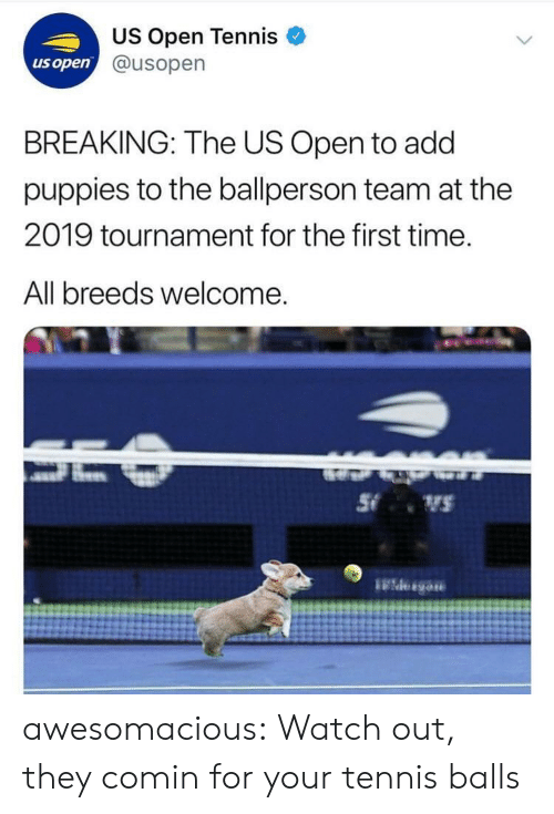 Tournament: US Open Tennis  @usopern  us open  BREAKING: The US Open to add  puppies to the ballperson team at the  2019 tournament for the first time.  All breeds welcome awesomacious:  Watch out, they comin for your tennis balls