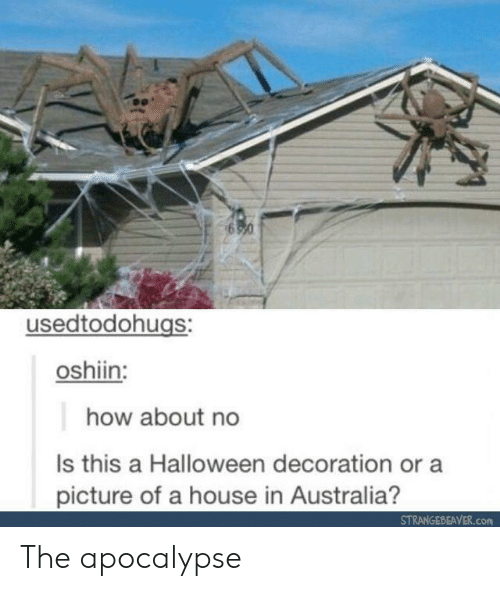 how about no: usedtodohugs:  oshiin:  how about no  Is this a Halloween decoration or a  picture of a house in Australia?  STRANGEBEAVER.com The apocalypse