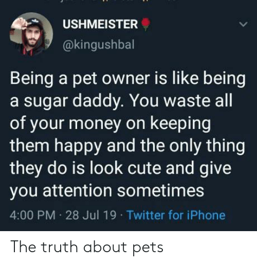 A Sugar Daddy: USHMEISTER  @kingushbal  Being a pet owner is like being  a sugar daddy. You waste all  of your money on keeping  them happy and the only thing  they do is look cute and give  you attention sometimes  4:00 PM 28 Jul 19 Twitter for iPhone The truth about pets