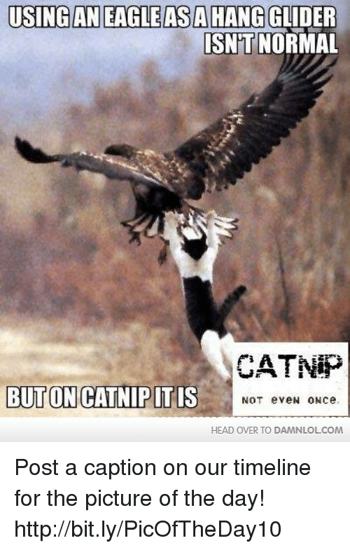 glider: USING AN EAGLE ASA HANG GLIDER  ISNT  NORMAL  CATNIP  BUT ON CATNIP ITIS  NOT eveN ONee  HEAD OVER TO DAMNLOLCOM Post a caption on our timeline for the picture of the day! http://bit.ly/PicOfTheDay10