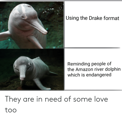 In Need Of: Using the Drake format  Reminding people of  the Amazon river dolphin  which is endangered They are in need of some love too