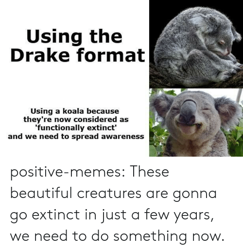 koala: Using the  Drake format  Using a koala because  they're now considered as  functionally extinct'  and we need to spread awareness positive-memes:  These beautiful creatures are gonna go extinct in just a few years, we need to do something now.