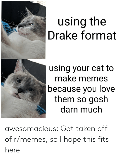 Make Memes: using the  Drake format  using your cat to  make memes  because vou love  them so gosh  darn much awesomacious:  Got taken off of r/memes, so I hope this fits here