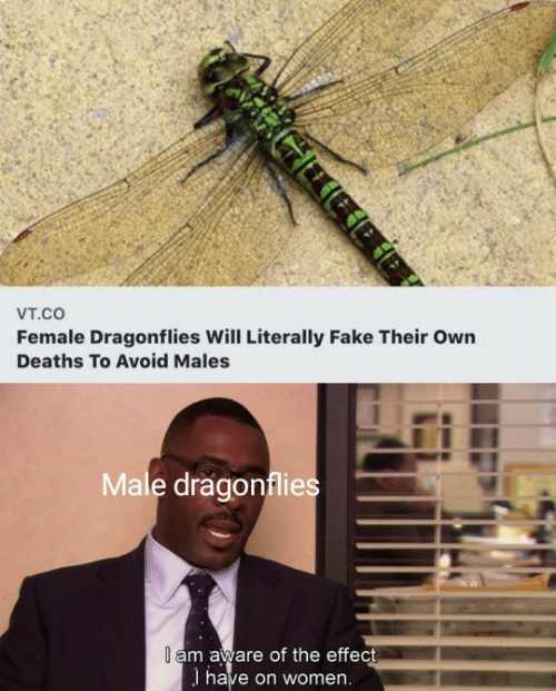 deaths: Vт.cO  Female Dragonflies Will Literally Fake Their Own  Deaths To Avoid Males  Male dragonflies  I am aware of the effect  I have on women.