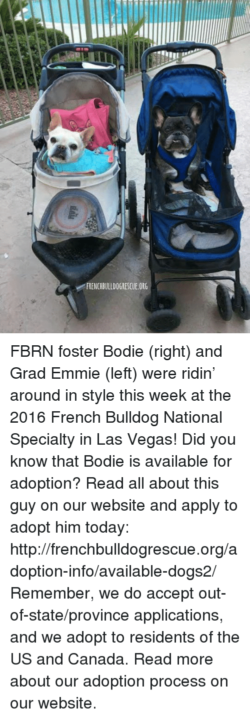 french bulldog: v FRENCHBULLDOGRESCUE.ORG FBRN foster Bodie (right) and Grad Emmie (left) were ridin' around in style this week at the 2016 French Bulldog National Specialty in Las Vegas!  Did you know that Bodie is available for adoption? Read all about this guy on our website <location, likes, dislikes> and apply to adopt him today: http://frenchbulldogrescue.org/adoption-info/available-dogs2/   Remember, we do accept out-of-state/province applications, and we adopt to residents of the US and Canada. Read more about our adoption process on our website.