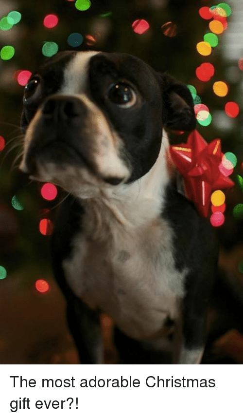 Memes adorable and vthe most adorable christmas gift ever