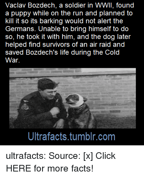Kill It: Vaclav Bozdech, a soldier in WWII, found  a puppy while on the run and planned to  kill it so its barking would not alert the  Germans. Unable to bring himself to do  so, he took it with him, and the dog later  helped find survivors of an air raid and  saved Bozdech's life during the Cold  War.  Ultrafacts.tumblr.com ultrafacts: Source: [x] Click HERE for more facts!