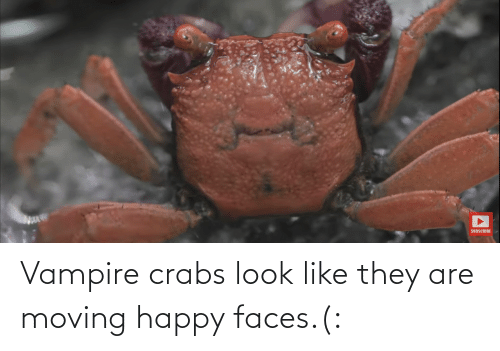 happy faces: Vampire crabs look like they are moving happy faces.(: