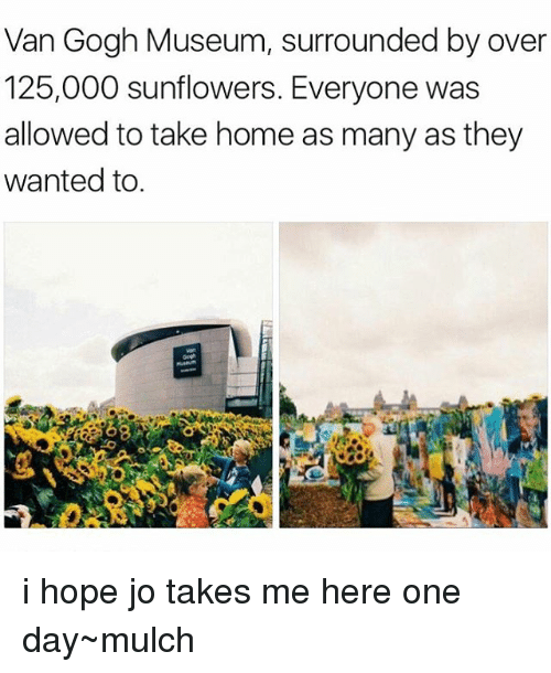 Sunflowering: Van Gogh Museum, surrounded by over  125,000 sunflowers. Everyone was  allowed to take home as many as they  wanted to i hope jo takes me here one day~mulch