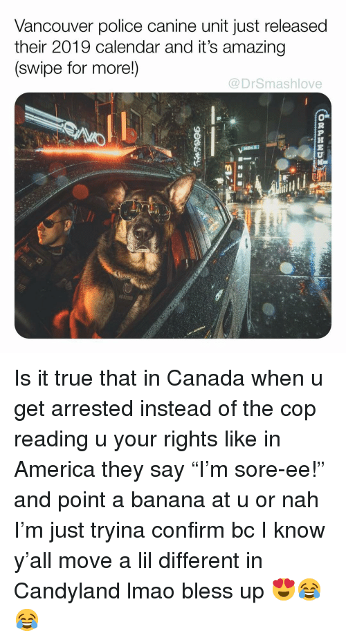 """Vancouver: Vancouver police canine unit just released  their 2019 calendar and it's amazing  (swipe for more!)  @DrSmashlove  .h Is it true that in Canada when u get arrested instead of the cop reading u your rights like in America they say """"I'm sore-ee!"""" and point a banana at u or nah I'm just tryina confirm bc I know y'all move a lil different in Candyland lmao bless up 😍😂😂"""