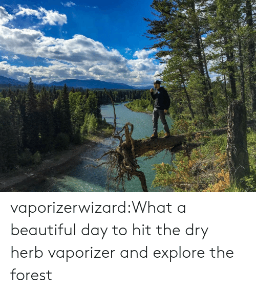 What A Beautiful Day: vaporizerwizard:What a beautiful day to hit the dry herb vaporizer and explore the forest