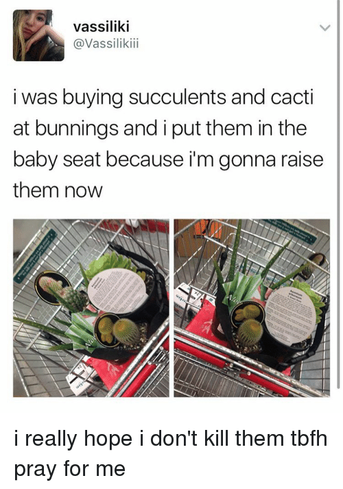 Cactie: Vassiliki  @Vassiliki  i was buying succulents and cacti  at bunnings and i put them in the  baby seat because i'm gonna raise  them now i really hope i don't kill them tbfh pray for me