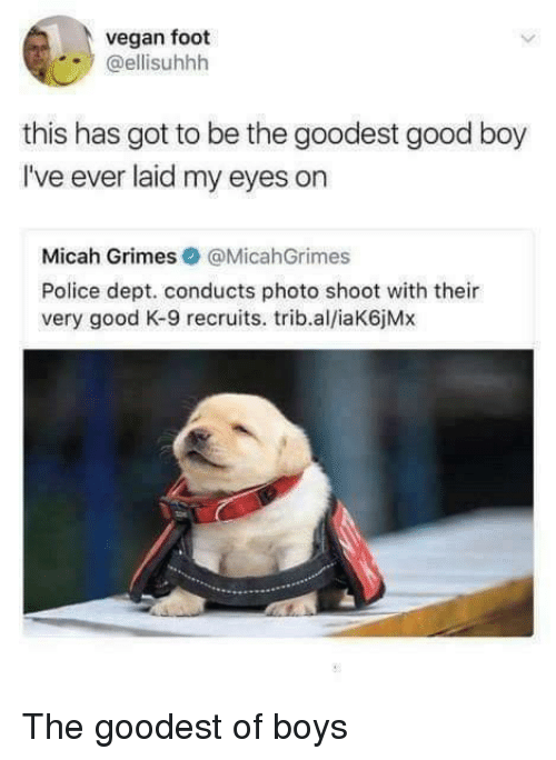 photo shoot: vegan foot  @ellisuhhh  this has got to be the goodest good boy  I've ever laid my eyes on  Micah Grimes@MicahGrimes  Police dept. conducts photo shoot with their  very good K-9 recruits. trib.al/iaK6jMx The goodest of boys