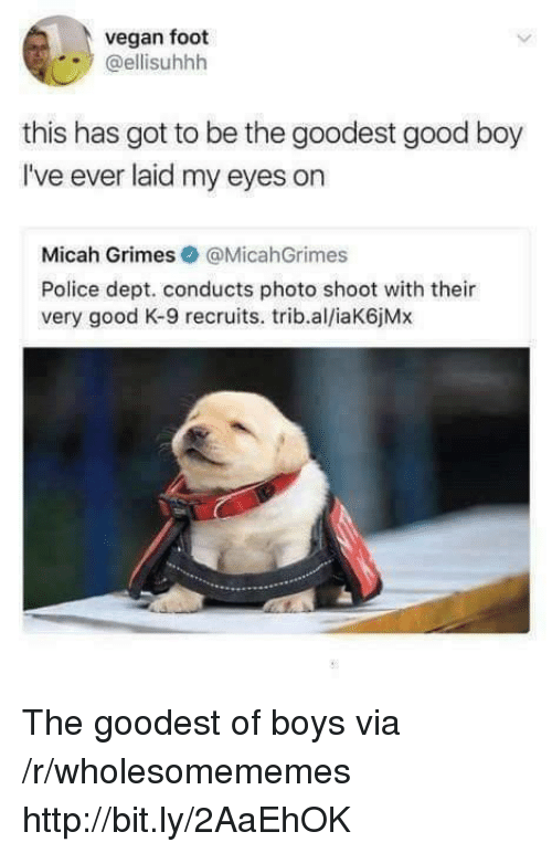 photo shoot: vegan foot  @ellisuhhh  this has got to be the goodest good boy  I've ever laid my eyes on  Micah Grimes@MicahGrimes  Police dept. conducts photo shoot with their  very good K-9 recruits. trib.al/iaK6jMx The goodest of boys via /r/wholesomememes http://bit.ly/2AaEhOK