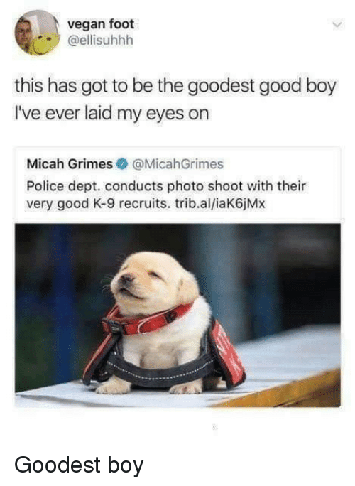 photo shoot: vegan foot  @ellisuhhh  this has got to be the goodest good boy  I've ever laid my eyes on  Micah Grimes@MicahGrimes  Police dept. conducts photo shoot with their  very good K-9 recruits. trib.al/iaK6jMx Goodest boy