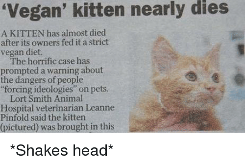 """vegan diet: 'Vegan' kitten nearly dies  A KITTEN has almost died  after its owners fed it a strict  vegan diet.  The horrific case has  prompted a warning about  the dangers of people  forcing ideologies"""" on pets.  Lort Smith Animal  Hospital veterinarian Leanne  Pinfold said the kitten  (pictured) was brought in this *Shakes head*"""