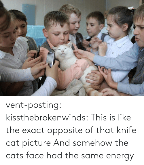 Posting: vent-posting:  kissthebrokenwinds: This is like the exact opposite of that knife cat picture  And somehow the cats face had the same energy