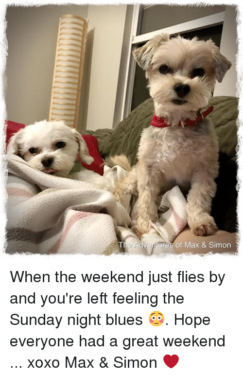 the sundays: ventures of Max & Simon When the weekend just flies by and you're left feeling the Sunday night blues 😳.  Hope everyone had a great weekend ... xoxo Max & Simon ❤️