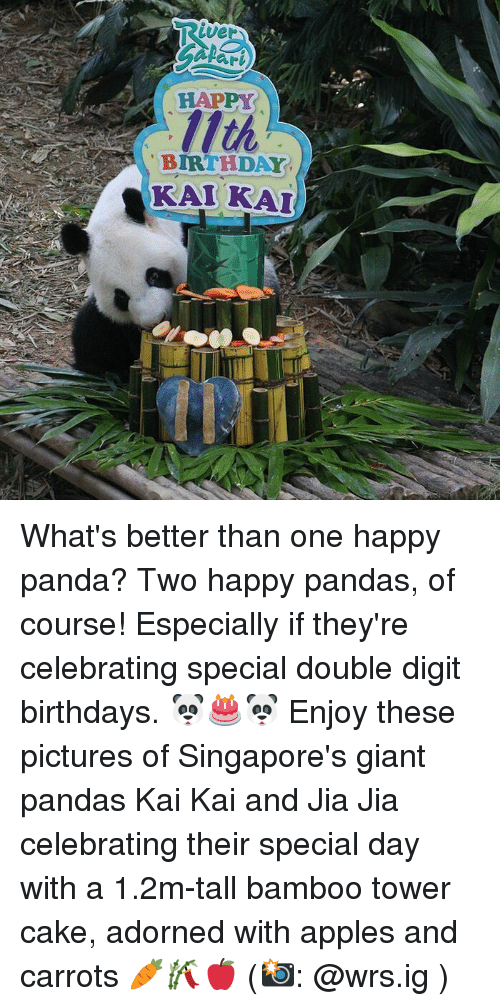 Birthday, Memes, and Panda: ver  ari  HAPPY  BIRTHDAY  KALKA What's better than one happy panda? Two happy pandas, of course! Especially if they're celebrating special double digit birthdays. 🐼🎂🐼 Enjoy these pictures of Singapore's giant pandas Kai Kai and Jia Jia celebrating their special day with a 1.2m-tall bamboo tower cake, adorned with apples and carrots 🥕🎋🍎 (📸: @wrs.ig )
