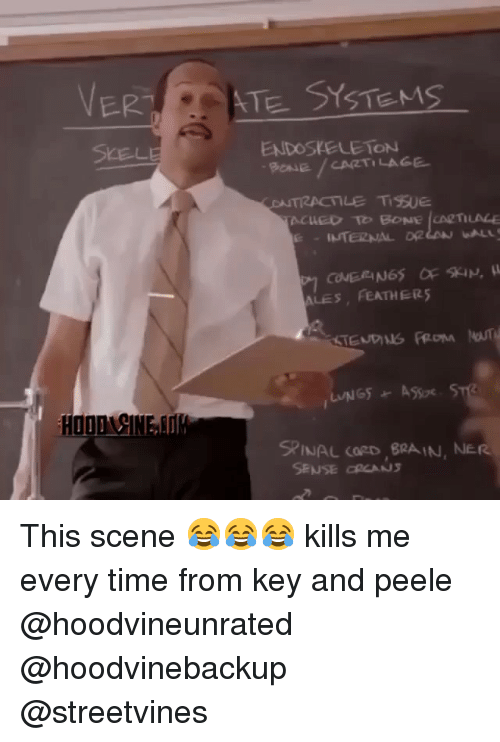 endoskeleton: VER,  STE SYSTEMS  ENDOSKELETON  PANE/CARTILAGE  ALES FEATHER5  SPINAL CORD,RA IN, NER  SENSE RCANS This scene 😂😂😂 kills me every time from key and peele @hoodvineunrated @hoodvinebackup @streetvines