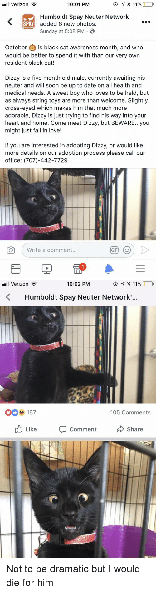 neuter: Verizon -  10:01 PM  Humboldt Spay Neuter Network  added 6 new photos.  Sunday at 5:08 PM .  SPAY  Humboldt  October is black cat awareness month, and who  would be better to spend it with than our very own  resident black cat!  Dizzy is a five month old male, currently awaiting his  neuter and will soon be up to date on all health and  medical needs. A sweet boy who loves to be held, but  as always string toys are more than welcome. Slightly  cross-eyed which makes him that much more  adorable, Dizzy is just trying to find his way into your  heart and home. Come meet Dizzy, but BEWARE.. you  might just fall in love!  If you are interested in adopting Dizzy, or would like  more details on our adoption process please call our  office: (707)-442-7729  O  Write a comment   Verizon *  10:02 PM  Humboldt Spay Neuter Network.'..  O187  105 Comments  ub Like Comment  Share <p>Not to be dramatic but I would die for him<br/></p>