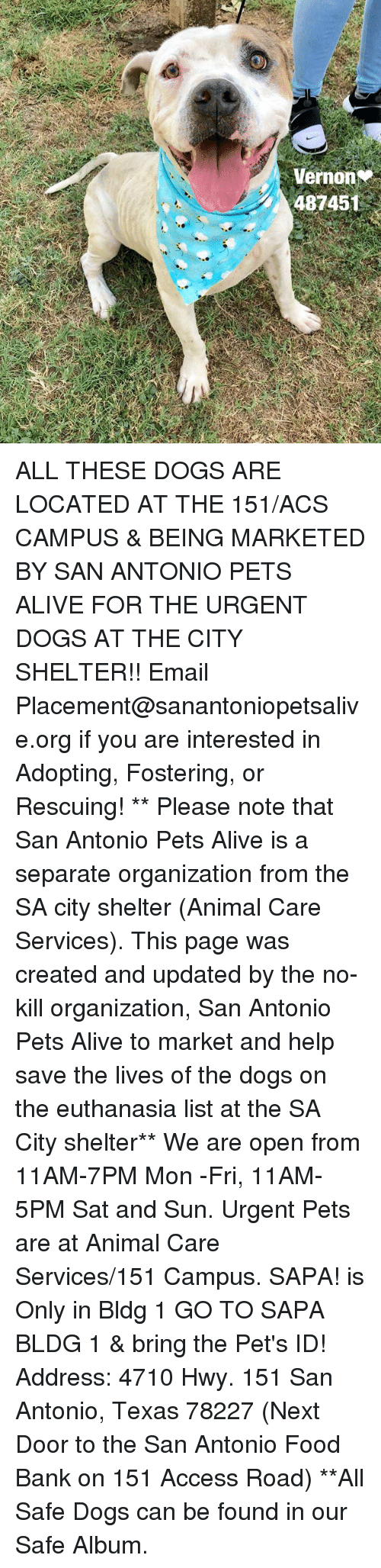 veron: Veron  48745 ALL THESE DOGS ARE LOCATED AT THE 151/ACS CAMPUS & BEING MARKETED BY SAN ANTONIO PETS ALIVE FOR THE URGENT DOGS AT THE CITY SHELTER!!  Email Placement@sanantoniopetsalive.org if you are interested in Adopting, Fostering, or Rescuing!                                                                                                                                                                                                                                                                                                                                                             ** Please note that San Antonio Pets Alive is a separate organization from the SA city shelter (Animal Care Services). This page was created and updated by the no-kill organization, San Antonio Pets Alive to market and help save the lives of the dogs on the euthanasia list at the SA City shelter**  We are open from 11AM-7PM Mon -Fri, 11AM-5PM Sat and Sun. Urgent Pets are at Animal Care Services/151 Campus. SAPA! is Only in Bldg 1 GO TO SAPA BLDG 1 & bring the Pet's ID! Address: 4710 Hwy. 151 San Antonio, Texas 78227 (Next Door to the San Antonio Food Bank on 151 Access Road) **All Safe Dogs can be found in our Safe Album.