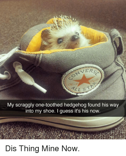 Mine Now: VERS  My scraggly one-toothed hedgehog found his way  into my shoe. I guess it's his now <p>Dis Thing Mine Now.</p>