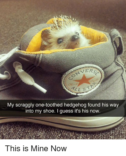 Mine Now: VERS  My scraggly one-toothed hedgehog found his way  into my shoe. I guess it's his now <p>This is Mine Now</p>