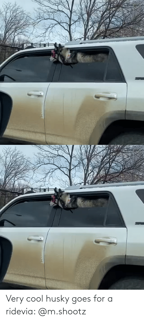 Goes: Very cool husky goes for a ridevia: @m.shootz