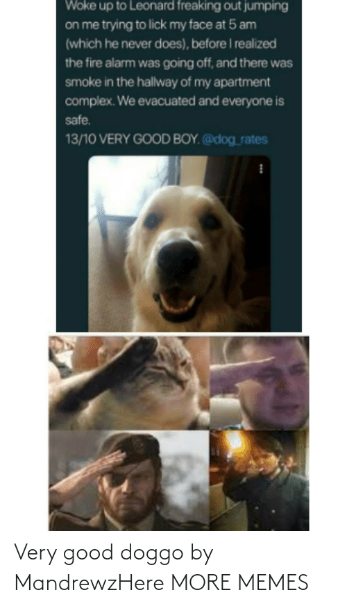 doggo: Very good doggo by MandrewzHere MORE MEMES