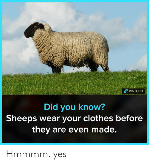sheeps: VIA 8SHIT  Did you know?  Sheeps Wear your clothes before  they are even made. Hmmmm. yes