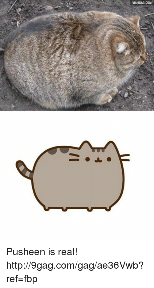 Dank, 🤖, and Pusheen: VIA 9GAG.COM Pusheen is real! http://9gag.com/gag/ae36Vwb?ref=fbp