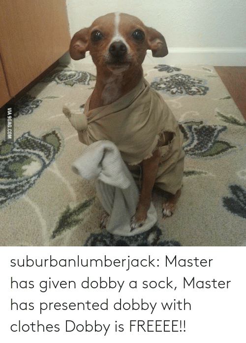 Master Has Given Dobby A Sock: VIA 9GAG.COM suburbanlumberjack:  Master has given dobby a sock, Master has presented dobby with clothes Dobby is FREEEE!!