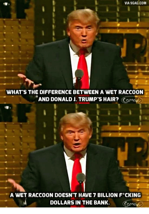 trump hair: VIA 9GAG.COM  WHAT'S THE DIFFERENCE BETWEEN A WET RACCOON  AND DONALD J. TRUMP'S HAIR?  Come  A WET RACCOON DOESNT HAVE 7 BILLION F CKING  DOLLARS IN THE BANK.