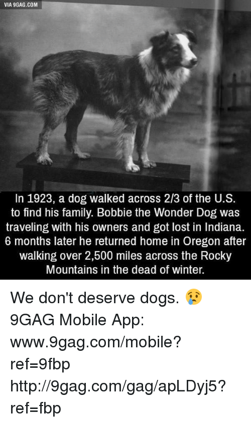 Www 9Gag: VIA gGAG.COM  In 1923, a dog walked across 2/3 of the U.S.  to find his family. Bobbie the Wonder Dog was  traveling with his owners and got lost in Indiana.  6 months later he returned home in Oregon after  walking over 2,500 miles across the Rocky  Mountains in the dead of winter. We don't deserve dogs. 😢 9GAG Mobile App: www.9gag.com/mobile?ref=9fbp  http://9gag.com/gag/apLDyj5?ref=fbp