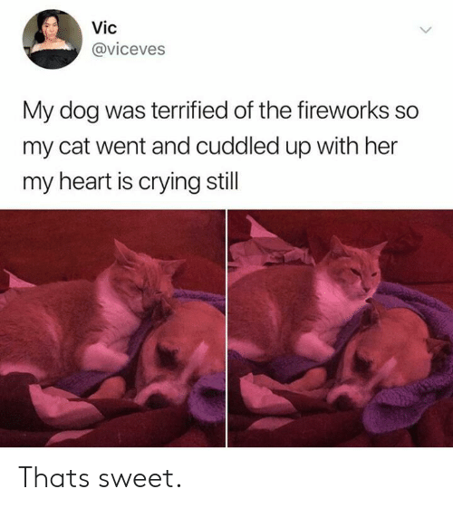 Fireworks: Vic  @viceves  My dog was terrified of the fireworks so  my cat went and cuddled up with her  my heart is crying still Thats sweet.