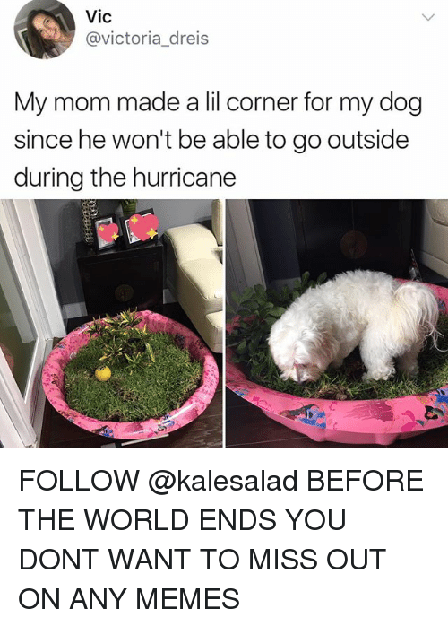 dogging: Vic  @victoria_dreis  My mom made a lil corner for my dog  since he won't be able to go outside  during the hurricane FOLLOW @kalesalad BEFORE THE WORLD ENDS YOU DONT WANT TO MISS OUT ON ANY MEMES