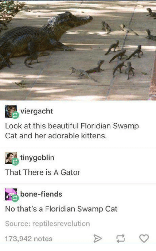 boned: viergacht  Look at this beautiful Floridian Swamp  Cat and her adorable kittens.  tinygoblin  That There is A Gator  bone-fiends  No that's a Floridian Swamp Cat  Source: reptilesrevolution  173,942 notes