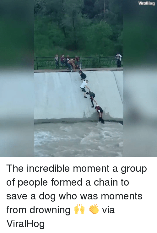 Dank, The Incredibles, and The Incredible: Viral Hag The incredible moment a group of people formed a chain to save a dog who was moments from drowning 🙌 👏  via ViralHog