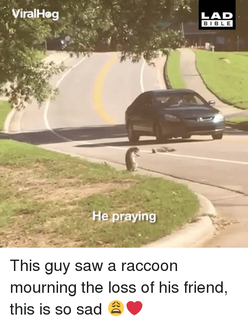 Dank, Saw, and Raccoon: ViralHeg  LAD  BIBL E  He praying This guy saw a raccoon mourning the loss of his friend, this is so sad 😩❤️
